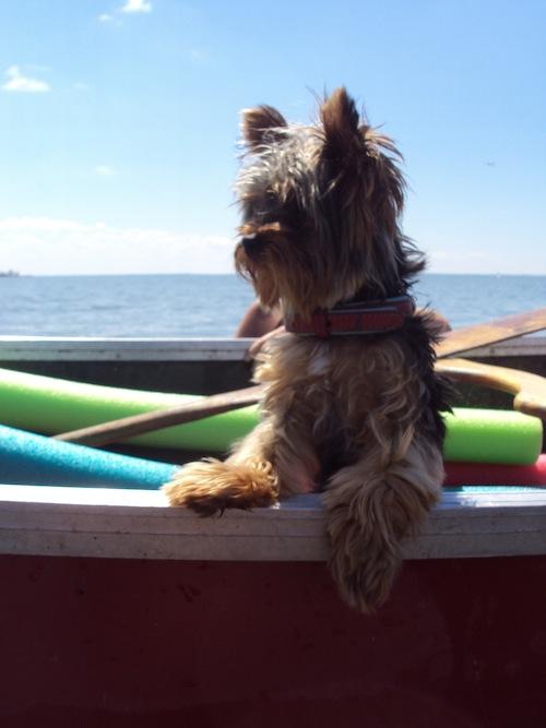 lola at sea