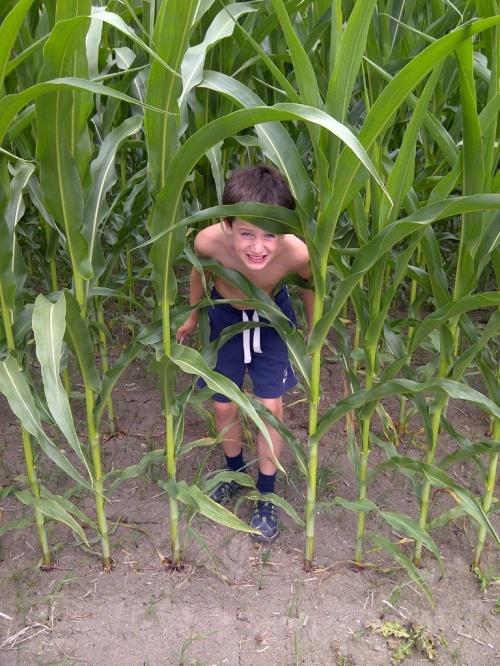Phoenix in the corn
