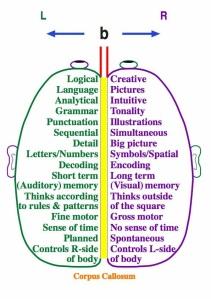 right:left brain